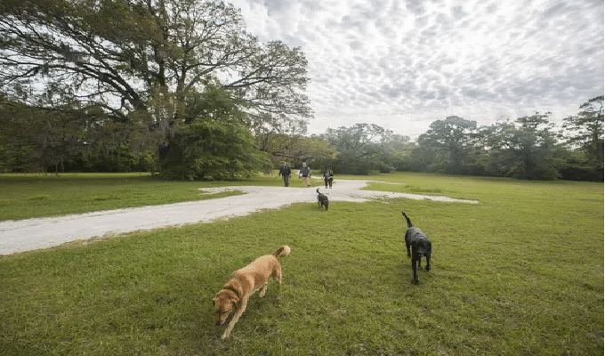 Dog Parks in Tallahassee