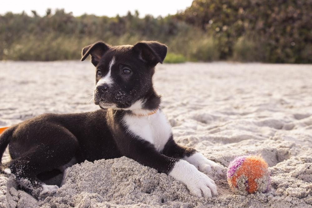 Hobby Island Beach Park Miami